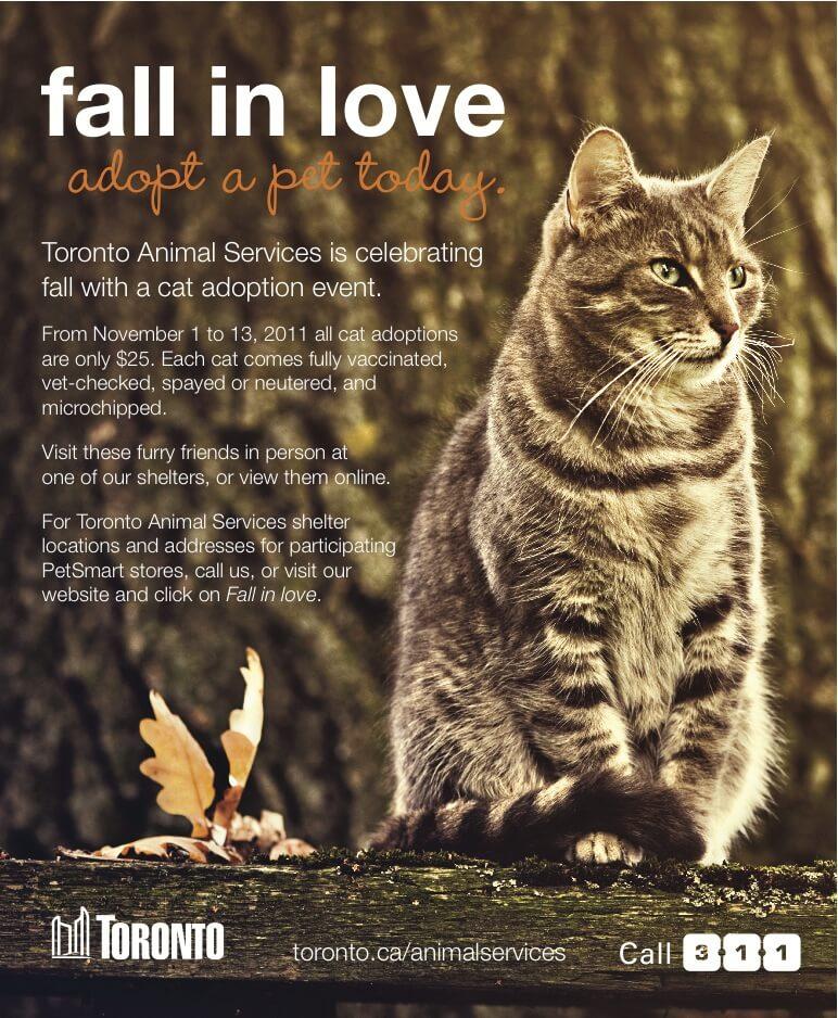 Toronto Cat Adoption Event