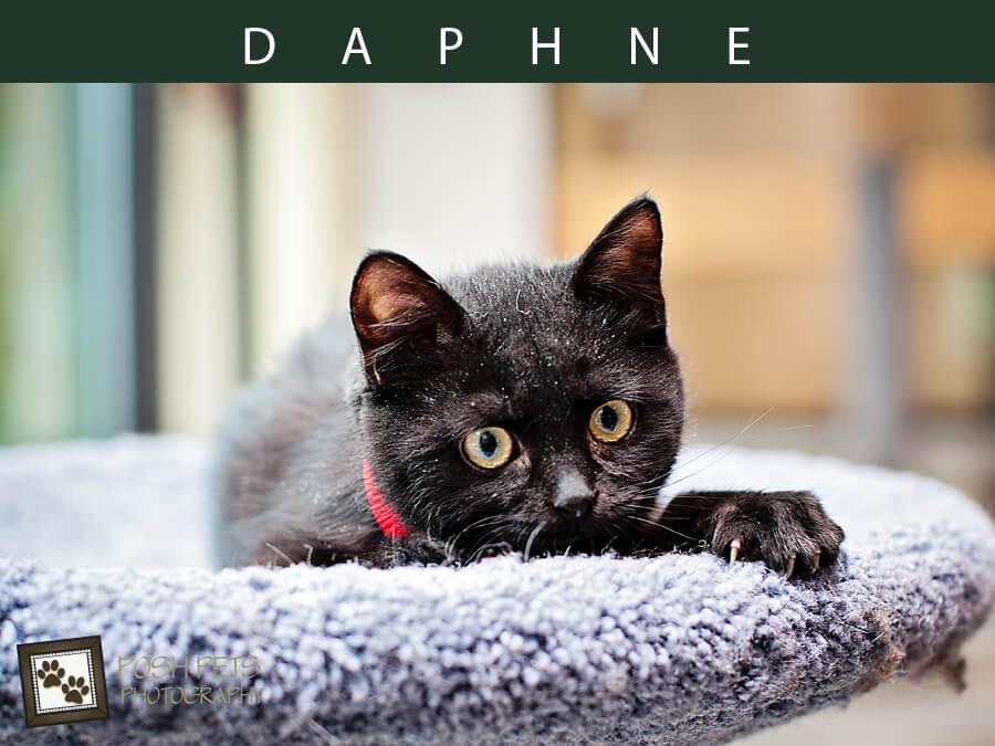 Adoptables – TAS North Region | Toronto Pet Photographer