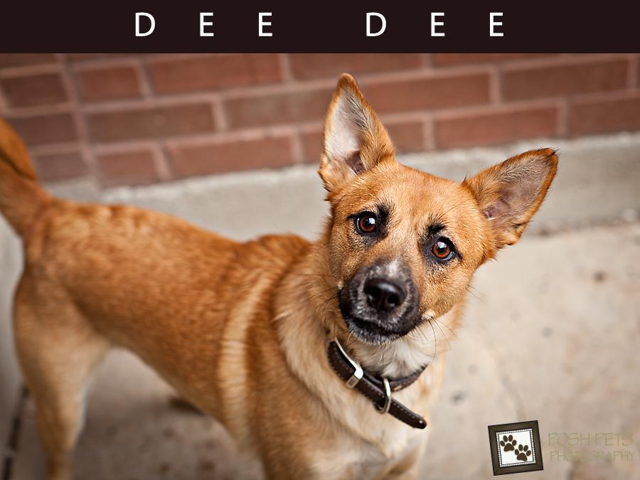 Adoptables – Toronto Animal Services | Pet Photographer Toronto