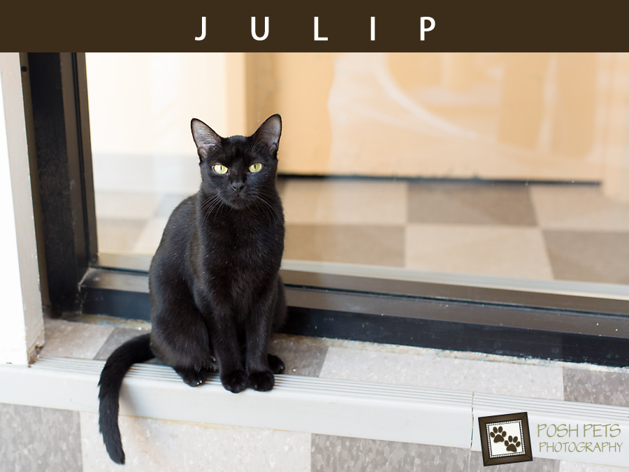Adoptables – Toronto Animal Services | Toronto Pet Photographer