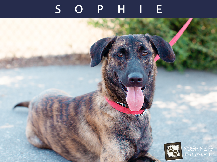 Adoptables – Toronto Animal Services | GTA Pet Photographer