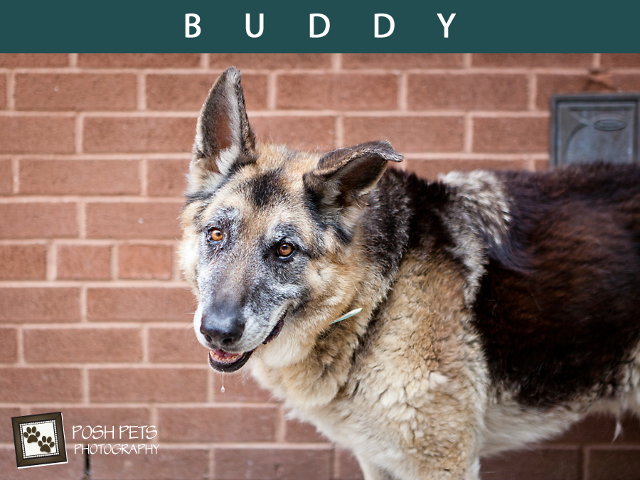Buddy – A Life Well-Lived… | Toronto Dog Photographer