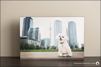 standout fine art pet product