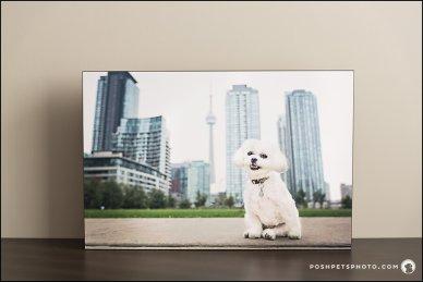 Standouts Posh Pets Photograhy