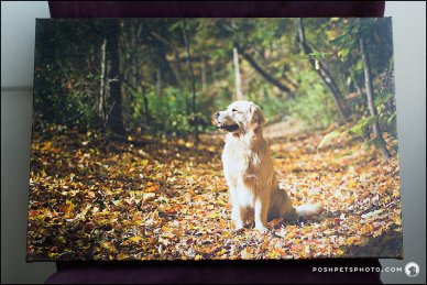 Gallery wrapped canvas Posh Pets Photograhy