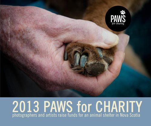 Paws for Charity – The Book | Canadian Pet Photographer