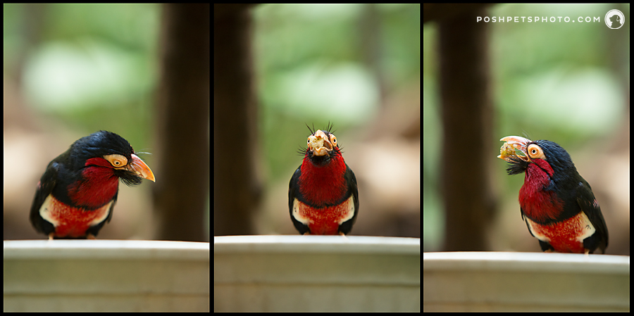 Project 52 – Triptych | Beautiful Bird Photography