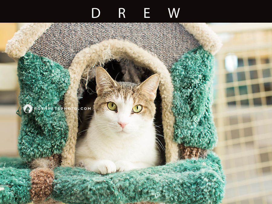 brown and white tabby cat laying in cat house