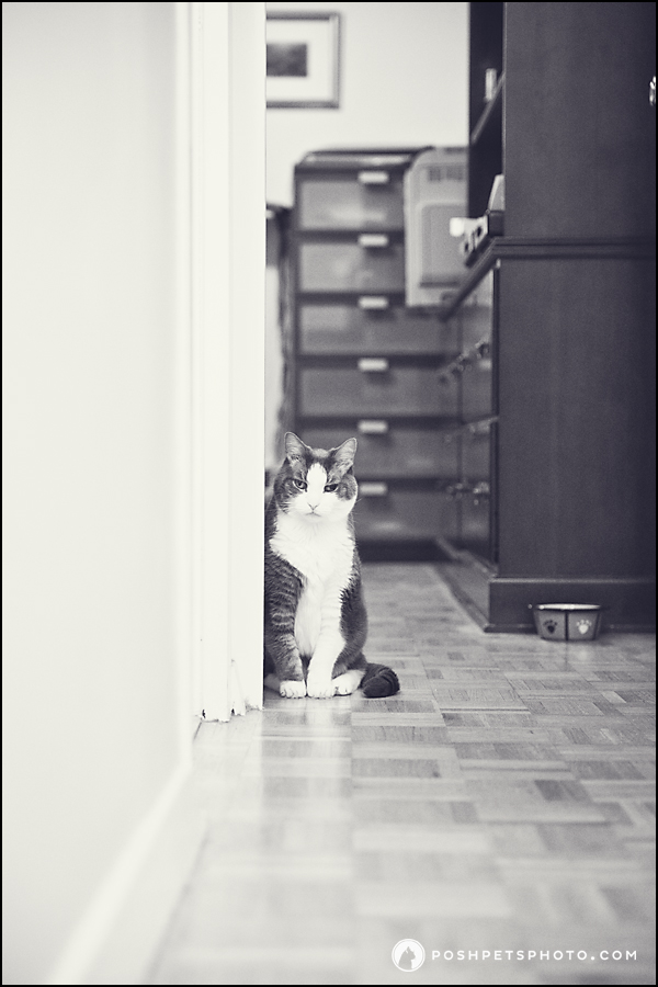 grey and white cat in long hallway with water bowl