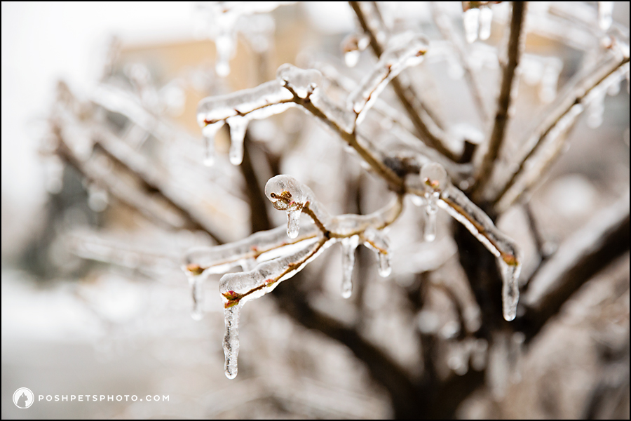 tree branch with layers of ice