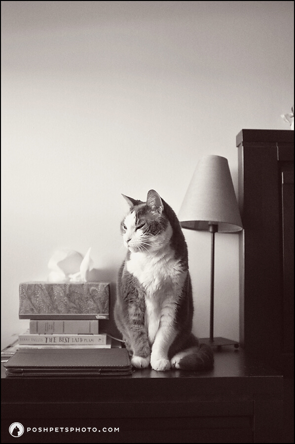 black and white image of cat sitting on bedside table
