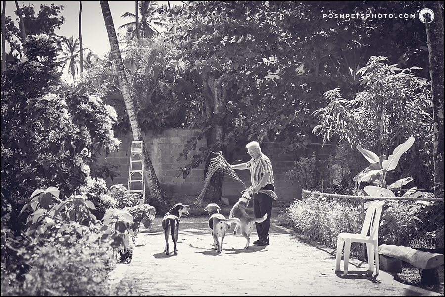 black and white sunny garden 3 dogs