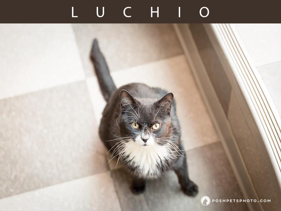 toronto cat photographer black and white cat