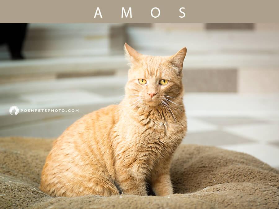 ontario pet photographer orange tabby cat