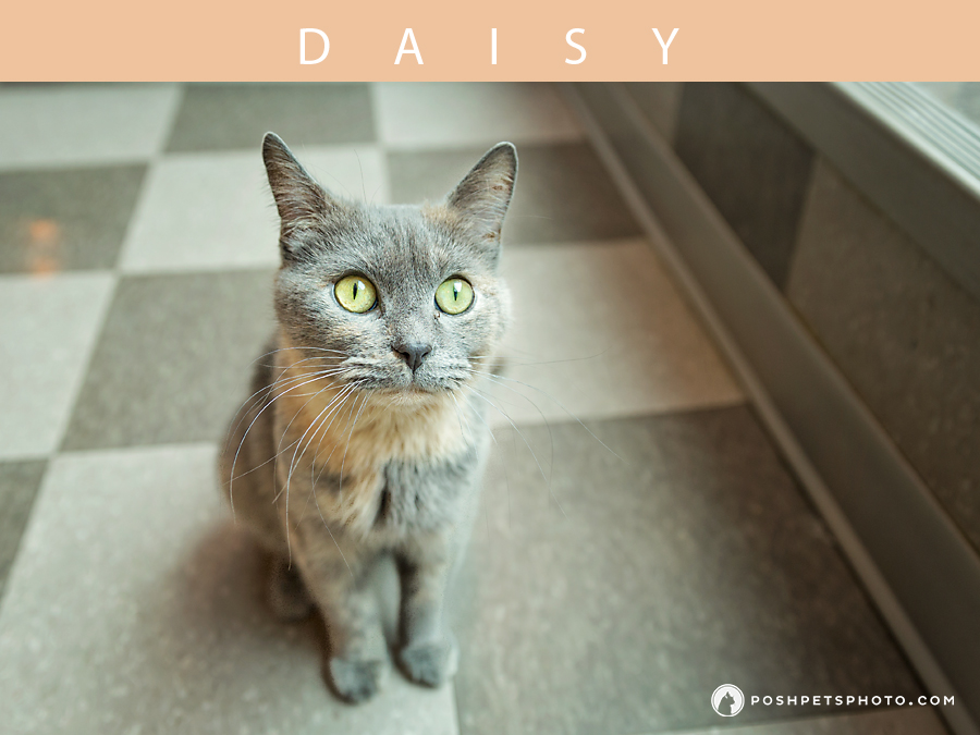 Posh Pets Photography - Toronto's Best Cat Photographer