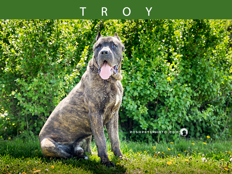 Adoptables – Toronto Animal Services | Pet Photographer