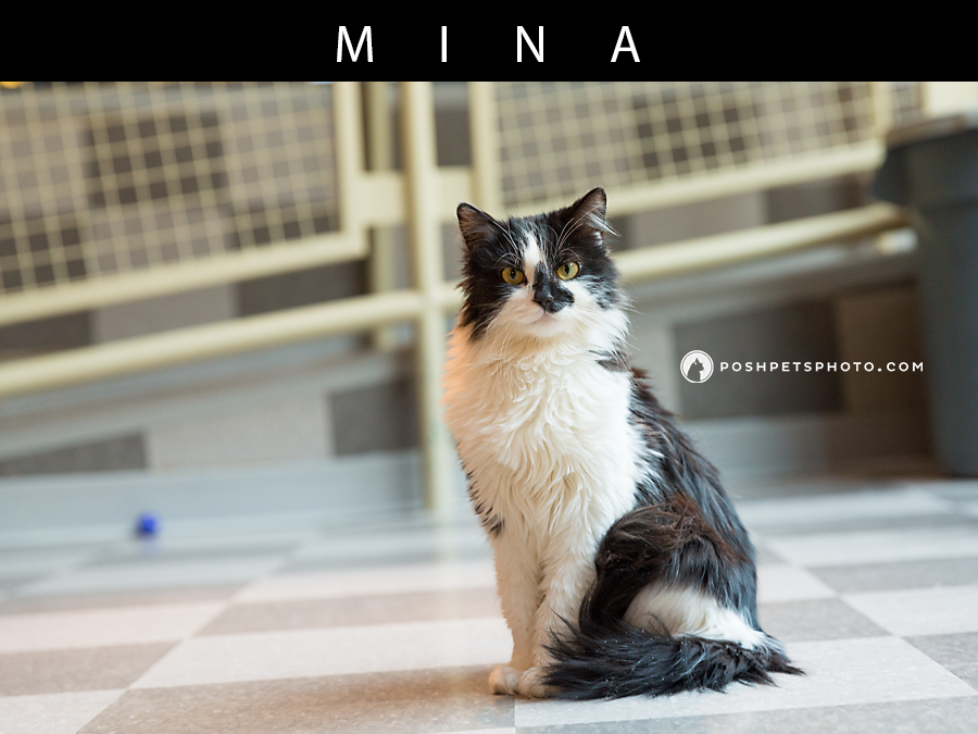 black-white-cat-posh-pets-photography