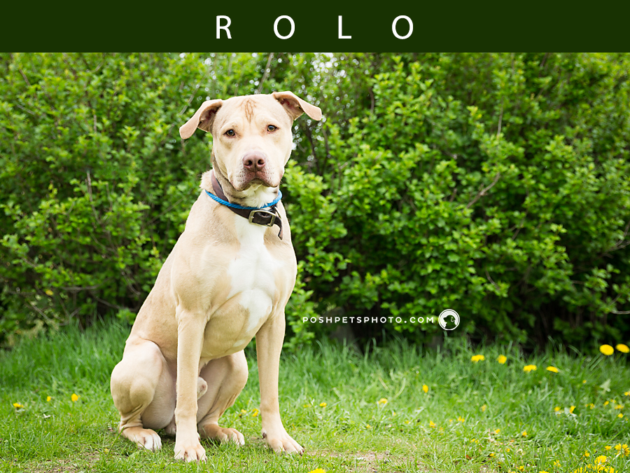 Adoptables – Toronto Animal Services | Pet Photographer in Toronto, Ontario