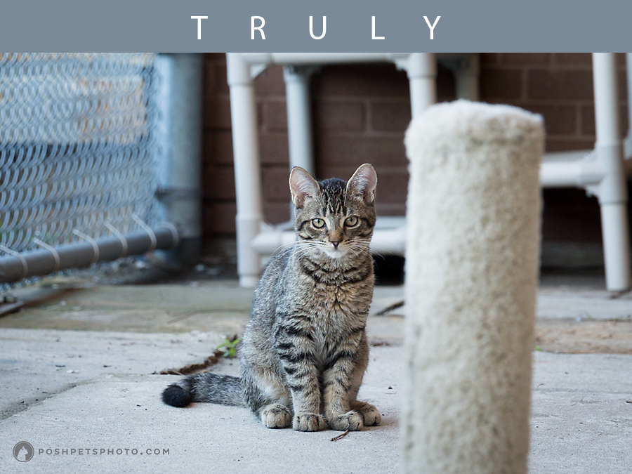tabby kitten posing