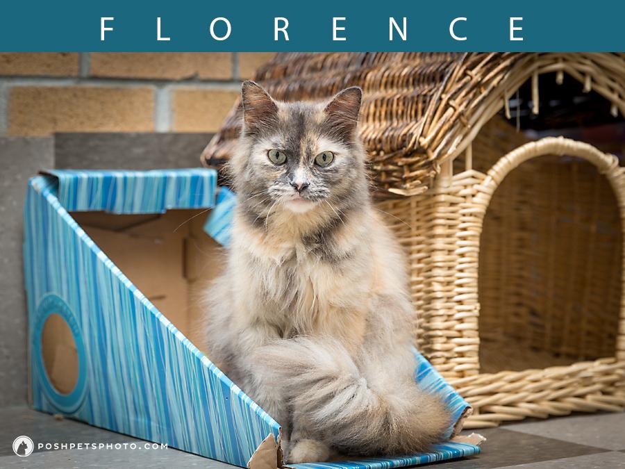 torte cat sitting in a blue box