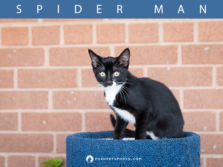 spider man kitten on his cat scratcher