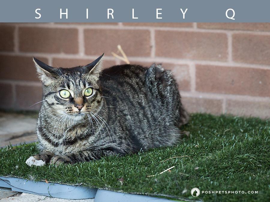 grey tabby cat on fake grass