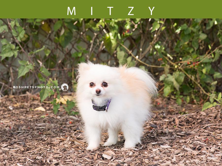 tiny dog pet photographer