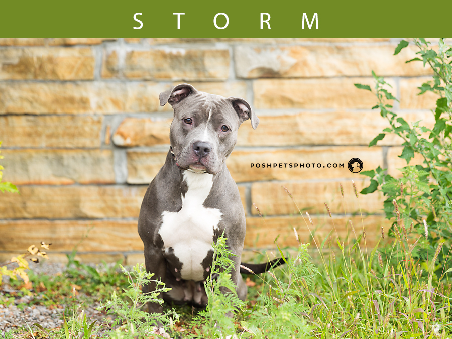 Adoptables – Toronto Animal Services | Dog Photography in Toronto