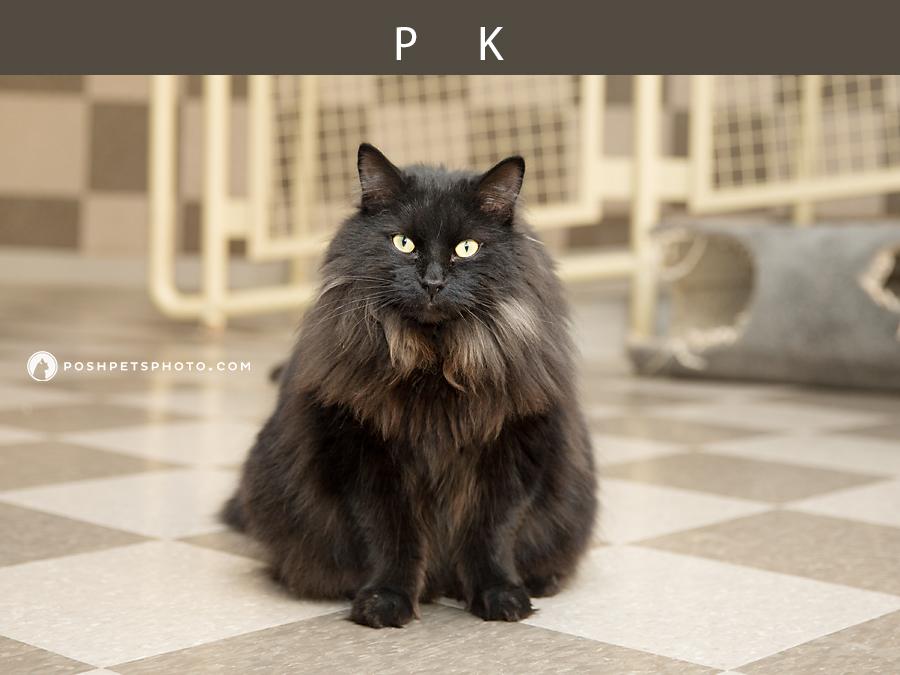 black cat on tiled floor