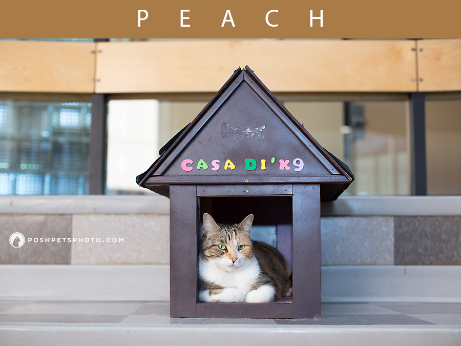 photo of cat sitting in dog house