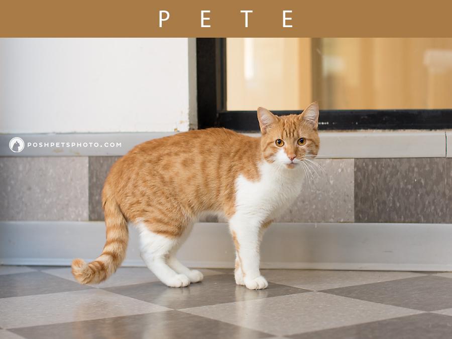 GTA orange cat on tiles