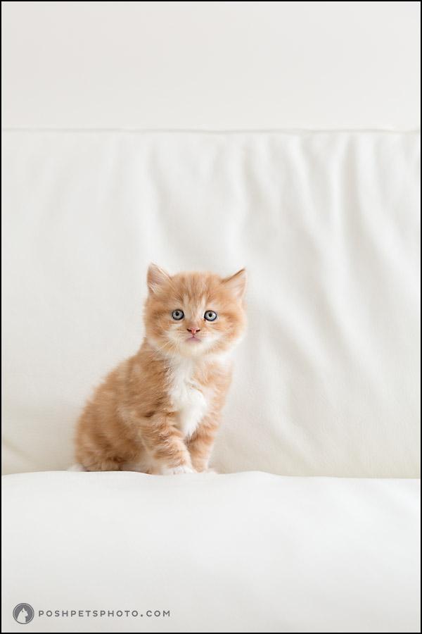 orange kitten on white couch