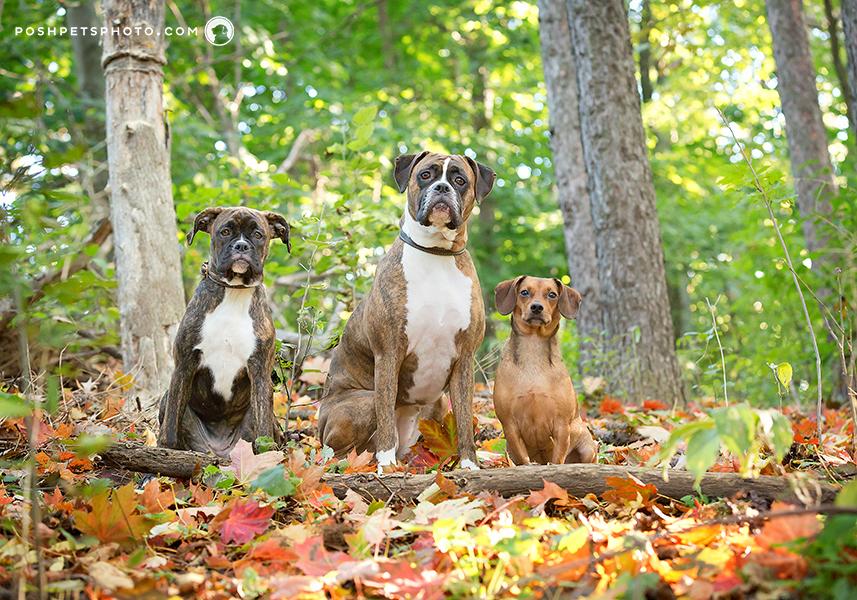 oakville-dog-family-photographer