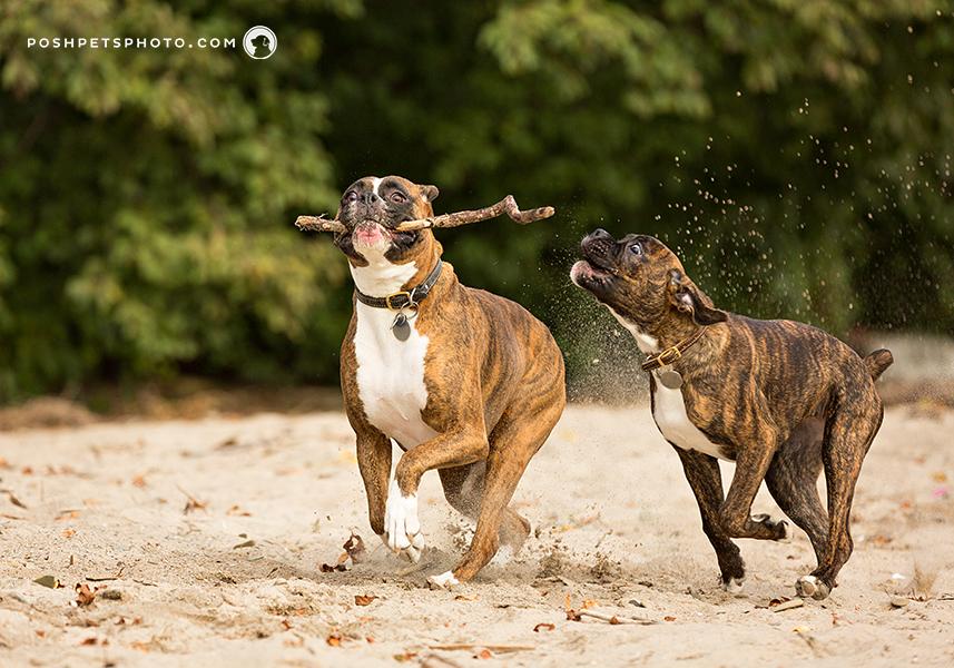 toronto-best-dog-photographer