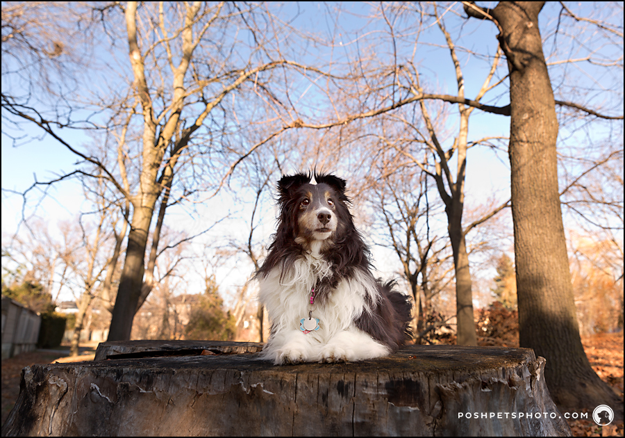 dog sitting on large tree trunk