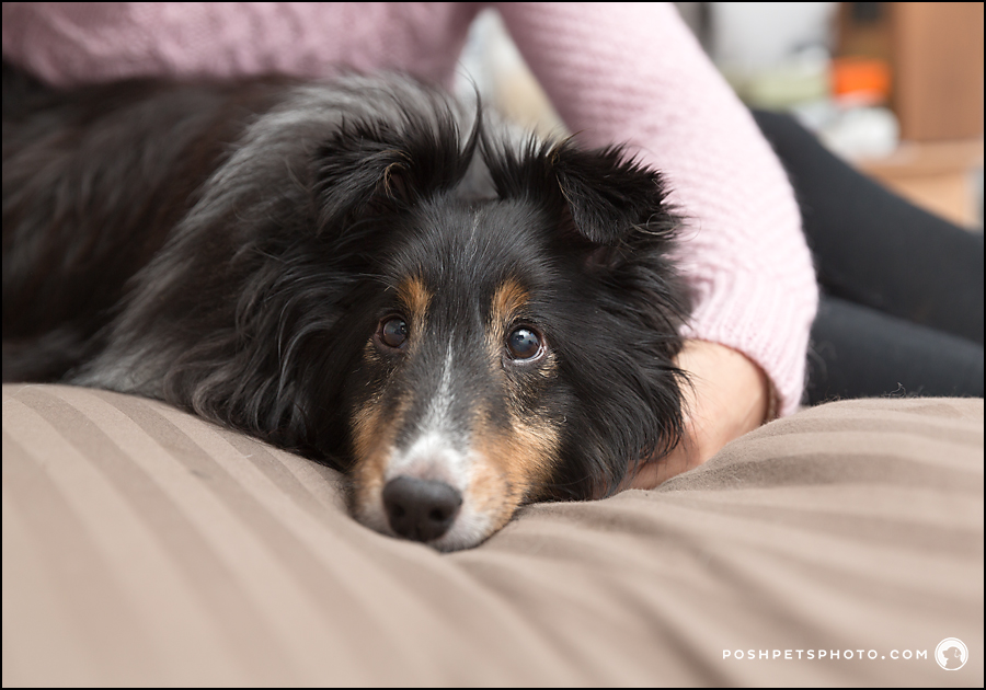 collie being held on bed