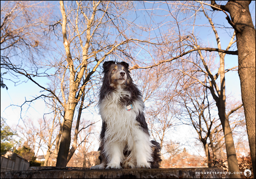 Toronto dog photography