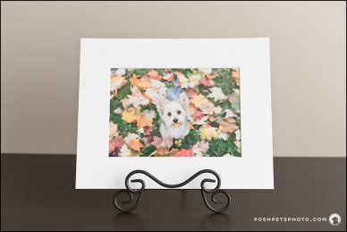 Matted Art Print Posh Pets Photograhy