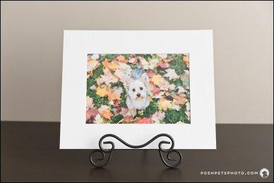 Matted Art Print Posh Pets Photograhy