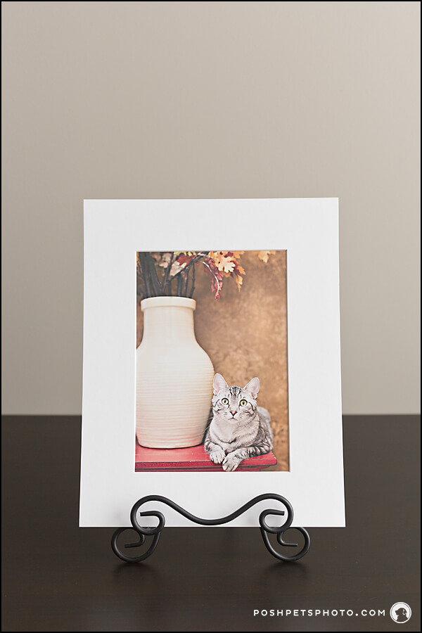 Matted art prints from Posh Pets Photography