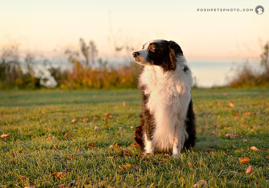 Moses – On The Beach | Canada Dog Photographer