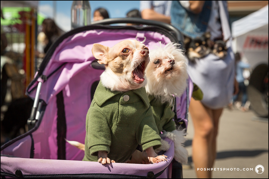 two dogs in a stroller in liberty village