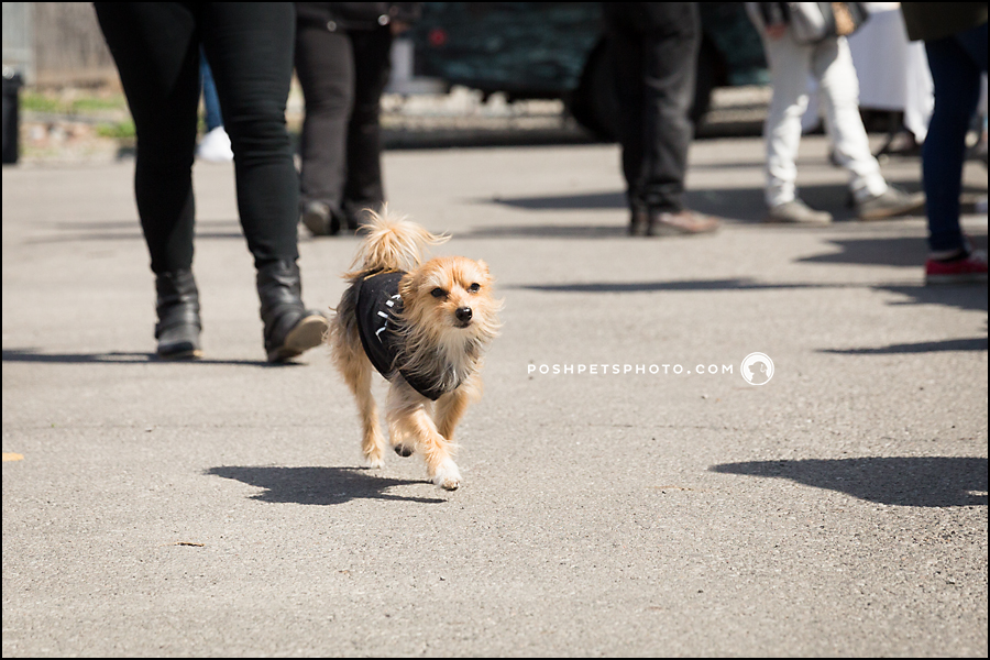 Pampered Pooches Wrap-Up Part 2 | Toronto Dog Event
