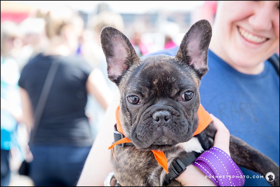 posh pets festival