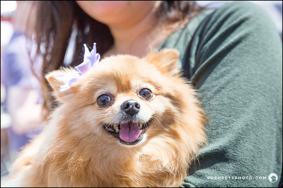 smiling happy dog at toronto pet festival