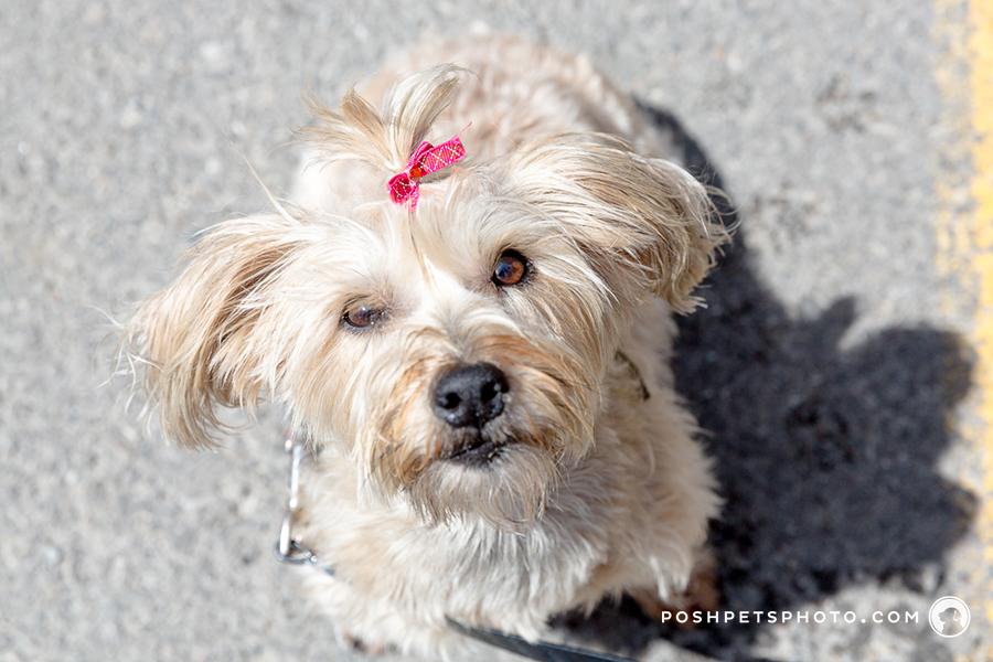 white dog girl in Toronto