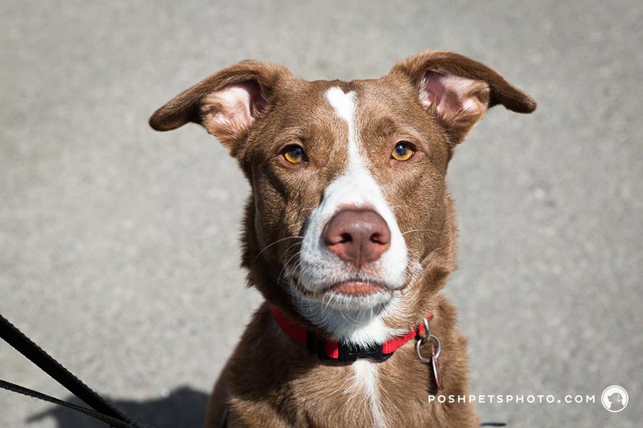 bold dog photography
