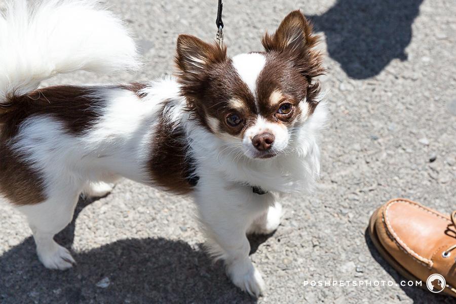 Canada dog photographer