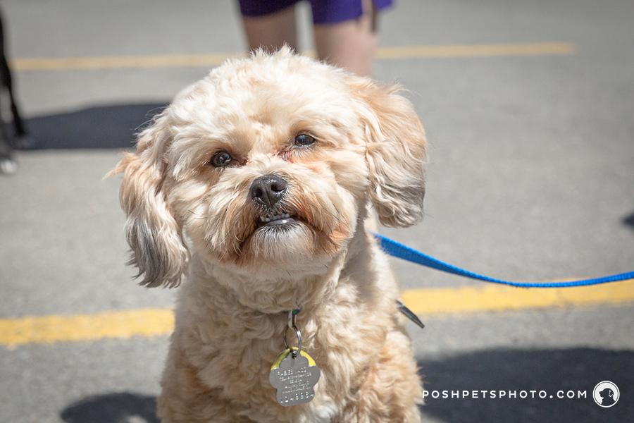 GTA dog event photographer