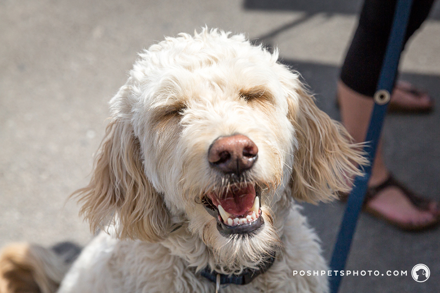 award winning toronto dog photographer
